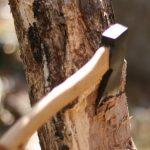 Електронні аукціони з придбання деревини