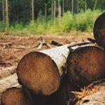 Продаж деревини на порталі Прозорро