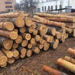 Як купити ліс-кругляк на Прозорро